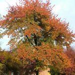 Il-parco-in-autunno-1