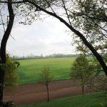 Il-parco-in-estate-1