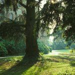Il-parco-in-estate-4