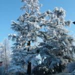 Il-parco-in-inverno-1