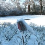 Il-parco-in-inverno-3