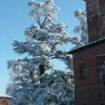 Il-parco-in-inverno-4