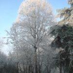 Il-parco-in-inverno-6