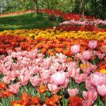 Il-parco-in-primavera-2