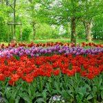 Il-parco-in-primavera-3