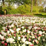 Il-parco-in-primavera-5