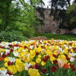 pralormo-tulipani-2012-800x535