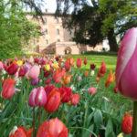 CASTELLO DI PRALORMO_Messer Tulipano 0a