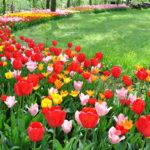 CASTELLO DI PRALORMO_Messer Tulipano 26