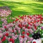 CASTELLO DI PRALORMO_Messer Tulipano 4zampe-B