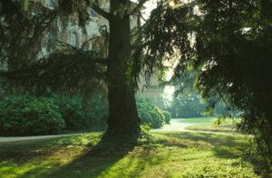 CASTELLO DI PRALORMO_parco 01