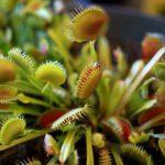 MT2019_CacciatoriDiPiante_11_piante-carnivore-