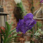 MT2019_CacciatoriDiPiante_11_serra_orchidee-