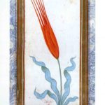MT2019_CacciatoriDiPiante_12_Tulipano-turco-da-The-Book-of-Tulips-c1725-