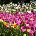 MT_03_fioriture-
