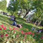 MT_area-picnic-