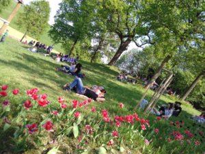 MT_area-picnic-