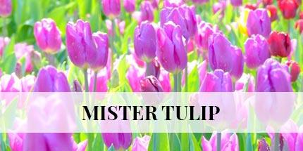 messer-tulipano1