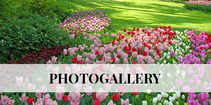 photogallery-en-ridotta